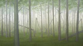 Polámané stromy